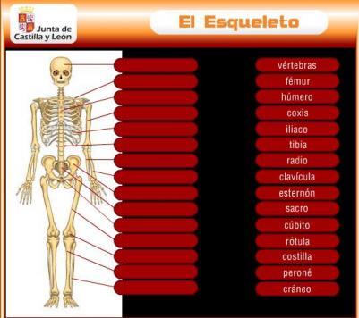 external image esqueleto.jpg?w=500