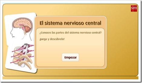external image el-sintema-nervioso-central.jpg?w=500