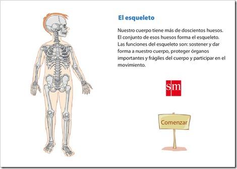external image principales-huesos.jpg?w=500