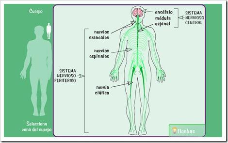 external image sistema-nervioso.jpg?w=500