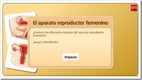 aparato-reproductor-femenino-e1330645719678