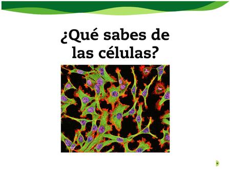 celula04