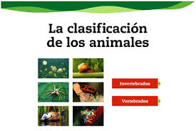 clasificacion-animales