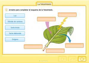 las-plantas-la-fotosintesis