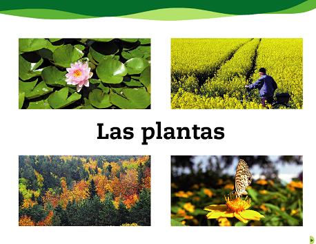 plantas4
