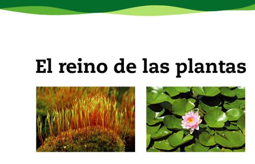 plantas8