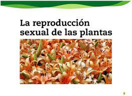 reprod_sexual