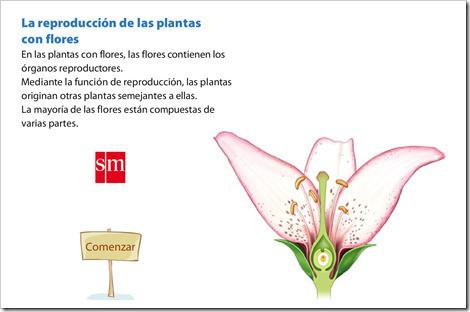 reproduccin-plantas-con-flores