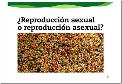 reproduccin-sexual-asexual
